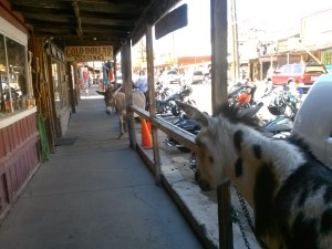 Oatman, AZ on the last day of the Laughlin River Run 2013